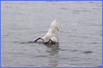 BiBi se jette à l'eau