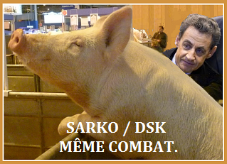 DSK SARKO