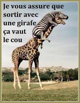 girafe blog