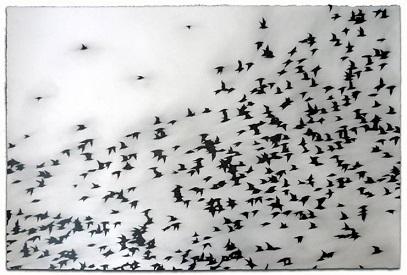 Oiseaux du Malheur